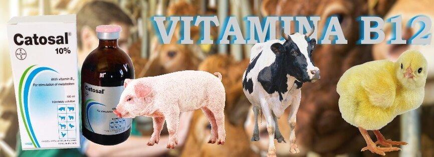 Catosal bayer vitamina b12 homelab price