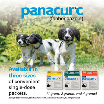 panacur canine dewormer fenbendazole helmintazole