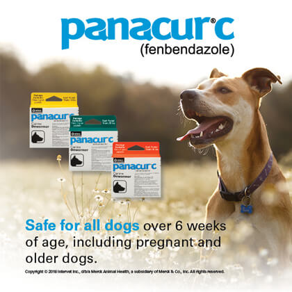 panacur canine dewormer fenbendazole helmintazole buy online
