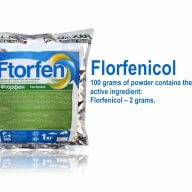 Ftorfenicol powder