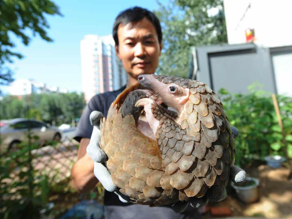 China bans wildlife trade