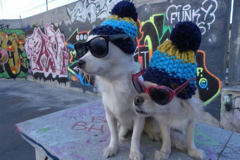 urban dogs