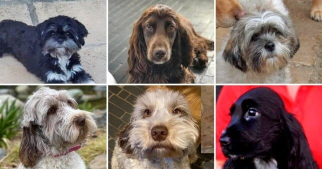 Seventeen dogs and puppies were stolen from a kennels (Picture: SWNS)